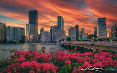 Downtown Miami from Brickell Key During Sunset