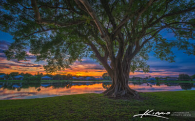 Ficus Tree Sunset at Lake Catherine in Palm Beach Gardens