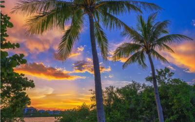 Sunset Coconut Tree at Jupiter Island along Waterway August 1 20