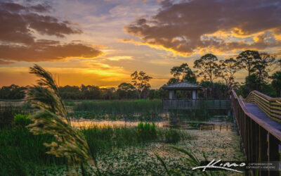 Warm Sunset Wetlands at Winding Waters Natural Area