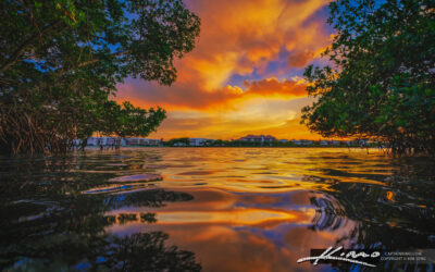 Loxahatchee River Sunset Mangrove Water Color Reflection