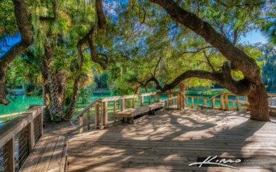 Gemini Springs Park DeBary Florida under Oak Tree